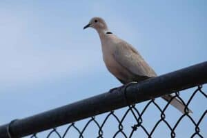 24 Backyard Birds in Idaho (Pictures & Facts)
